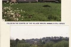 Fields in the centre of the village where animals still graze.