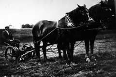 1930s Will West and team of Suffolk Punches.